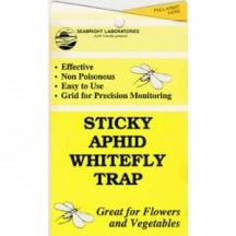 White Fly traps