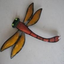 Colour Dragon Fly